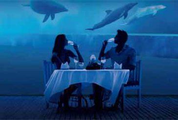 Cenare con i delfini con l'iniziativa 'Acquario Sotto le Stelle'