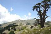 Nuovo tracciato per ammirare le bellezze del Parco del Pollino