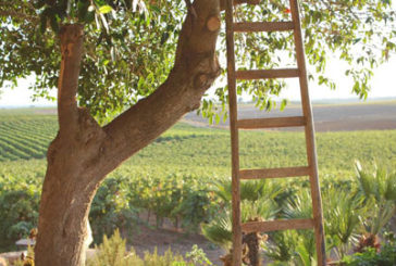Mare e vino protagonisti della nuova edizione del Mandrarossa Vineyard Tour