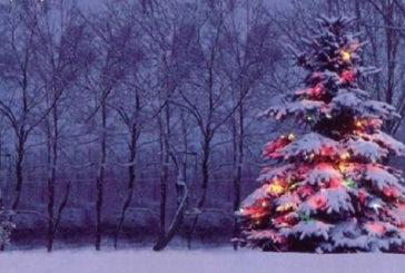 A Pescara 8 alberi di Natale donati dal Parco Nazionale d'Abruzzo