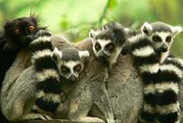 Con Best Tours in Madagascar tra relax, immersioni, avventura e pace