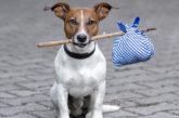 GNV sigla partnership con Agras Pet Food per gli amici a 4 zampe