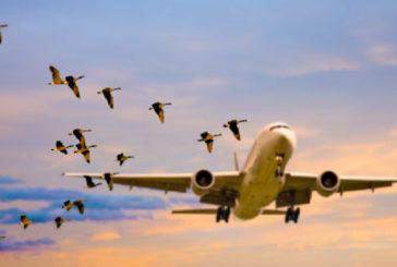 Corte Ue: niente rimborso ritardo dopo bird strike