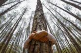 Eden Viaggi pianta alberi in Kenya insieme a Treedom
