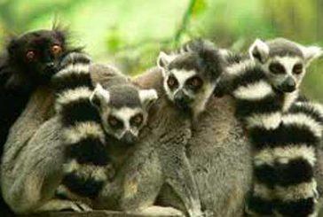 Il Madagascar è la novità del catalogo 'Africa e Caraibi 2017' di Eden Margò