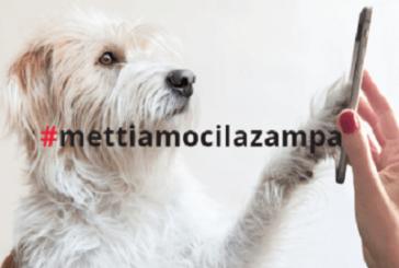 Anche cani e gatti possono apporre una 'firma' per una petizione in loro favore