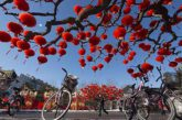 Aeroporto Ancona-Falconara: via libera da Enac per voli con la Cina