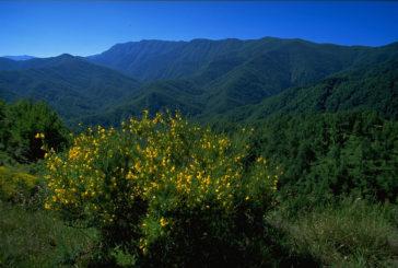 Si rinnova l'accordo tra Parco Foreste Casentinesi e Apt Servizi