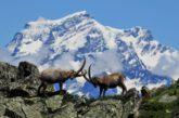Nuovo video per andare alla scoperta della 'wilderness' Svizzera