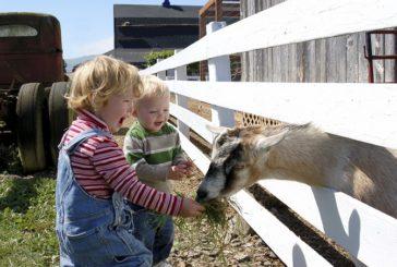 Nuove legge sull'agriturismo: novità e chiarimenti