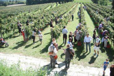 Mtv Puglia: doppio appuntamento con Cantine Aperte