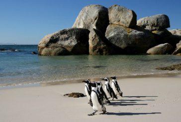 Con Go Afrique lungo la Garden Route alla scoperta del Sudafrica