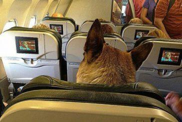 Da Usa stretta su animali a sostegno emotivo in aereo