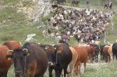 Transumanza, Unesco decide su Patrimonio: può essere svolta aree interne