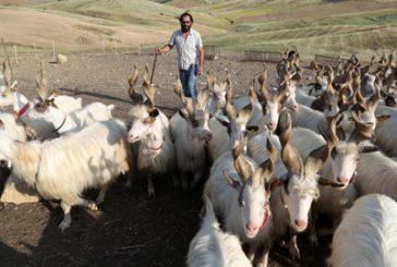 Tra capre, olio e pomodoro Sicilia al top con le Experience di Airbnb