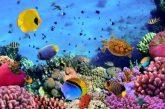 Mar Rosso meta al top per le vacanze invernali: parola di Veratour