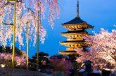 Pasqua in Giappone tra i ciliegi in fiore con KiboTours