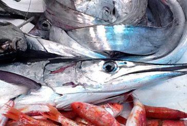 L'augghia protagonista a Favignana con degustazioni, laboratori e battute di pesca