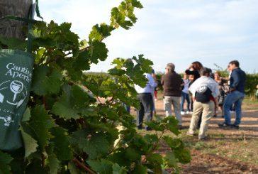 Torna 'Cantine Aperte in vendemmia', grande festa in Puglia per 20 manifestazione