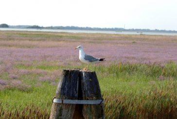 Houseboat celebra l'anno del turismo lento tra natura e birdwatching