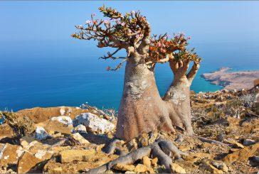 A Palermo dieci giorni dedicati allo Yemen e alla biodiversità minacciata di Socotra