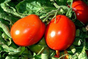 Una domenica dedicata al Rosso Siccagno alla fattoria RurAlia