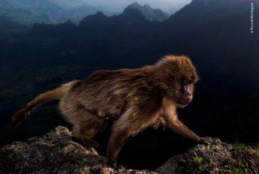 Al Forte di Bard la mostra 'Wildlife Photographer of the Year'