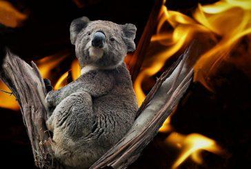 Tourism Australia, incendi non hanno interessato le principali destinazioni turistiche
