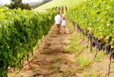 Il calendario del 2020 del Movimento Turismo del Vino tra fiere ed eventi
