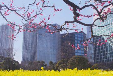 Tokyo apre nuove rotte dall'aeroporto di Haneda e inaugura due fermate della metro