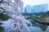 Tokyo celebra la fioritura dei ciliegi con nuove aperture e una ricca offerta di dolci